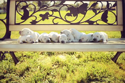 Reina and Olaf's Pups