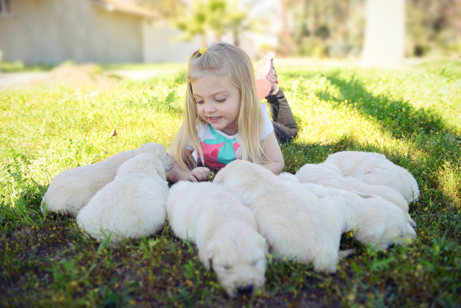 Granddaughter Playing with Olaf and Chloe's Puppies
